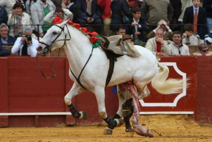 Corrida. Grand spectacle de souffrance d'un cheval.